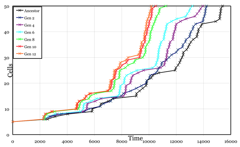 Number of cells over time for various generations of my heterocyst simulation